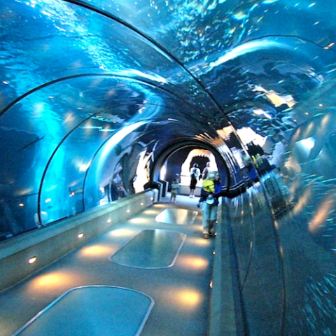 Oceanarium Tunnel Walk with Marine Show - Boracay