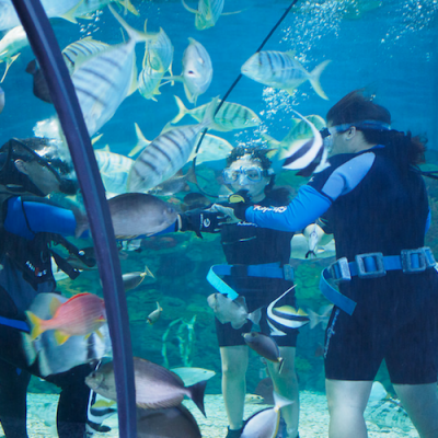 Aquarium Scuba Diving - Boracay